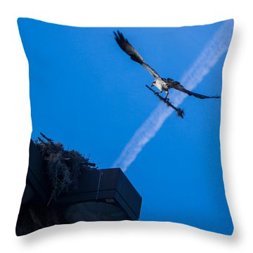 Osprey Carrying Stick To Nest Throw Pillow