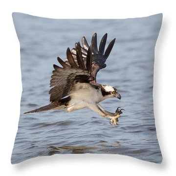 Osprey Catching Dinner Throw Pillow