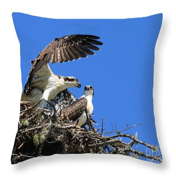 Osprey Chicks Ready To Fledge Throw Pillow by Debbie Stahre
