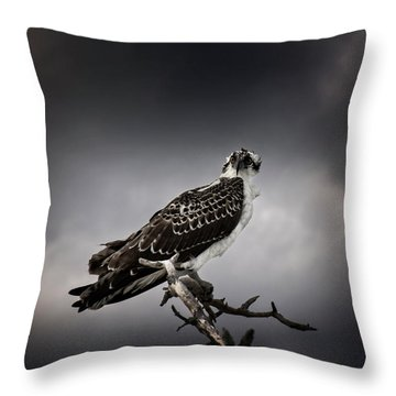 Throw Pillow featuring the photograph Osprey by Chrystal Mimbs