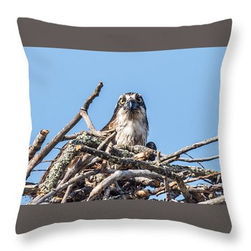 Osprey Eyes Throw Pillow by Paul Freidlund
