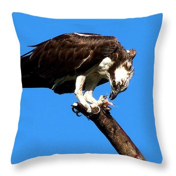 Osprey Feeding 008 Throw Pillow