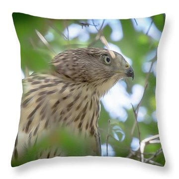 Red-shouldered Hawk Fledgling 1 Throw Pillow