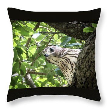 Red-shouldered Hawk Fledgling - 5 Throw Pillow