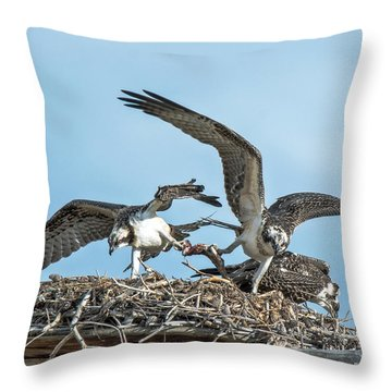 Throw Pillow featuring the photograph Osprey Food Fight by Stephen  Johnson
