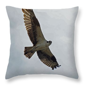 Osprey In Flight Throw Pillow by Ernie Echols