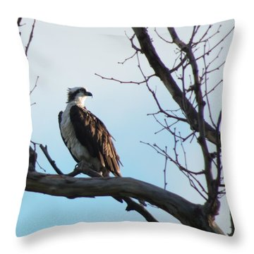 Osprey In Tree Throw Pillow