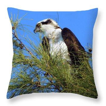 Osprey In Tree Throw Pillow
