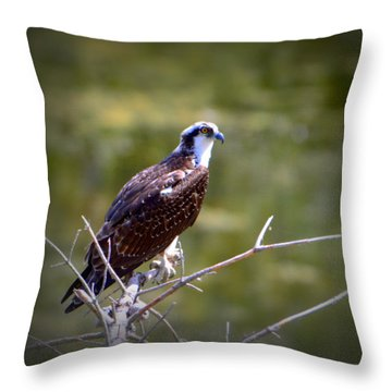 Osprey In Wait Throw Pillow