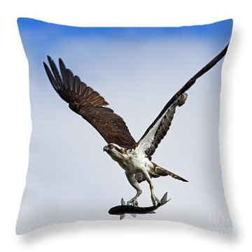 Osprey Incoming Mullet Throw Pillow by Larry Nieland