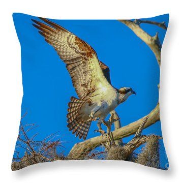 Osprey Landing On Branch Throw Pillow