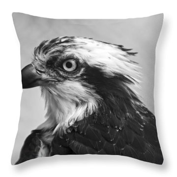 Osprey Monochrome Portrait Throw Pillow