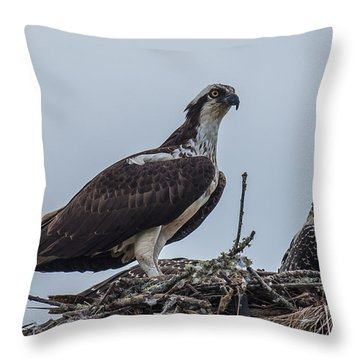 Osprey On A Nest Throw Pillow by Paul Freidlund