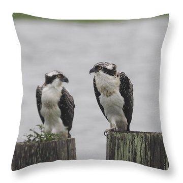 Osprey On Nj Shore 2014 Throw Pillow