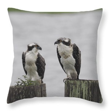 Osprey On Nj Shore 2014 Throw Pillow