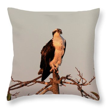 Osprey On The Caloosahatchee River In Florida Throw Pillow by Louise Heusinkveld
