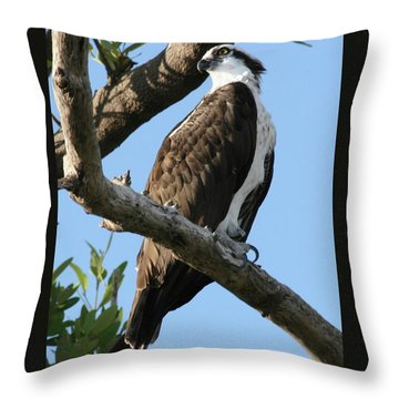 Osprey - Perched Throw Pillow