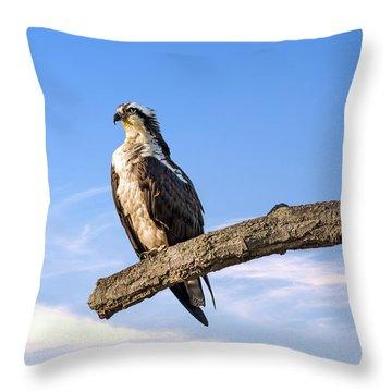 Osprey Reverence Throw Pillow