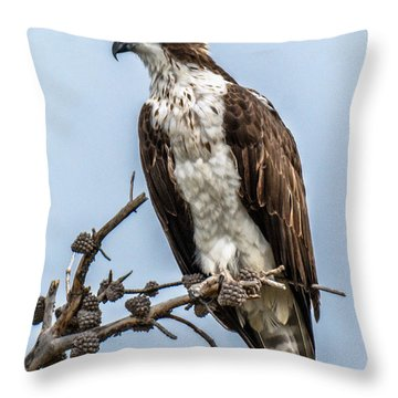 Throw Pillow featuring the photograph Osprey Sentry by Stephen  Johnson