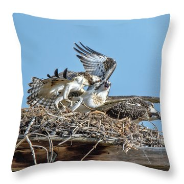 Throw Pillow featuring the photograph Osprey Sibling Rivalry by Stephen  Johnson
