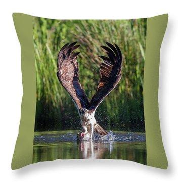 Osprey - Strike Throw Pillow