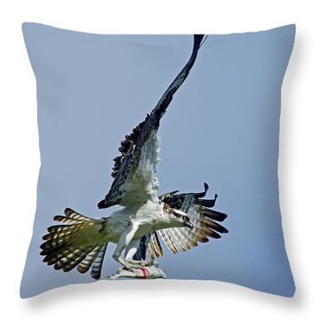 Osprey Success Throw Pillow by Larry Nieland