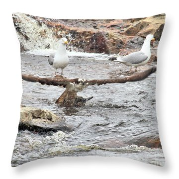 Throw Pillow featuring the photograph Osprey Takes Fish From Gulls by Debbie Stahre