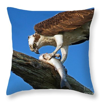 Osprey The Meal Throw Pillow