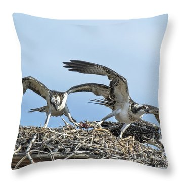 Throw Pillow featuring the photograph Osprey Tug-of-war by Stephen  Johnson