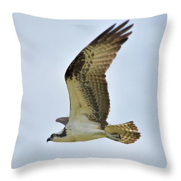 Osprey Upswing Throw Pillow