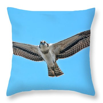 Throw Pillow featuring the photograph Osprey Wingspan by Stephen  Johnson
