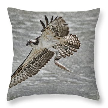 Osprey With Breakfast Throw Pillow by Deborah Benoit