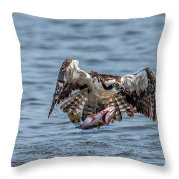 Osprey With Catch 9108 Throw Pillow