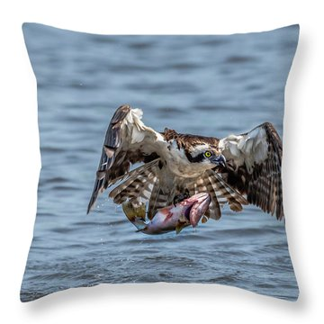 Osprey With Catch 9108 Throw Pillow