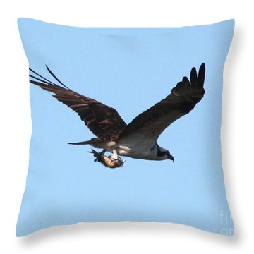Osprey With Fish Throw Pillow by Carol Groenen