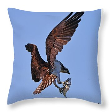 Osprey With Fresh Catch Throw Pillow