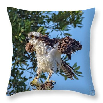 Osprey With Meal Throw Pillow
