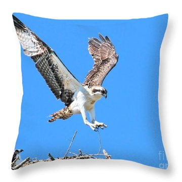Ospreys Learning To Fly Throw Pillow