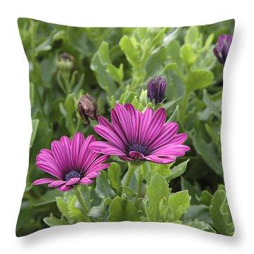 Osteospermum Flowers Throw Pillow by Erin Paul Donovan
