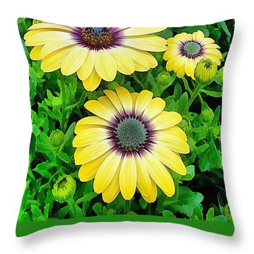 Osteospermum Serenity Blue Throw Pillow