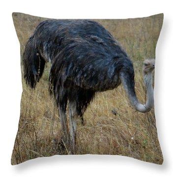 Ostrich In The Grass 1 Throw Pillow
