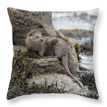 Otter Beside Loch Throw Pillow