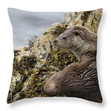 Otter Relaxing On Rocks Throw Pillow