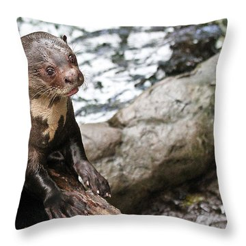 Otter Surprise Throw Pillow