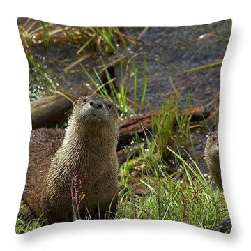 Throw Pillow featuring the photograph Otters by Steve Stuller
