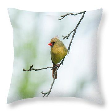Out On A Limb 2 Throw Pillow