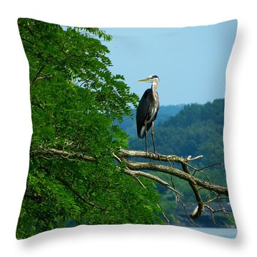 Out On A Limb Throw Pillow by Donald C Morgan