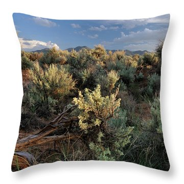Out On The Mesa 7 Throw Pillow