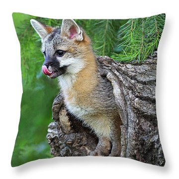 Out Pops A Gray Fox Throw Pillow
