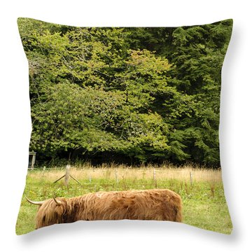 Throw Pillow featuring the photograph Out To Pasture by Christi Kraft